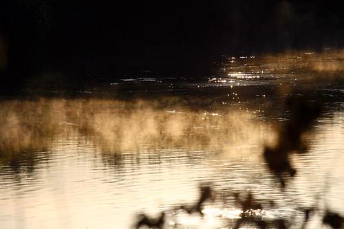 red orange sun yellow sunrise dawn photo weide foto shot sebastian pics picture meadow wiese pic photograph aurora redsky hayfield bild grassland range sonnenaufgang sunup kühe wümme blockland morgenrot deich wümmewiesen nappi hamme krong camera:make=canon camera:model=canoneos400ddigital exif:exposure_bias=0ev exif:iso_speed=100 exif:exposure=14000sec niederblockland sebastiannapierkowski exif:aperture=f40 exif:focal_length=200mm exif:flash=offdidnotfire napierkowski meta:exif=1279270667