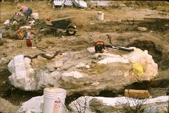 Paluxysaurus jonesi pelvic block