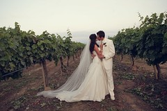 Pro Wedding Photos CD # 1 289