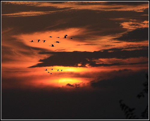 sunset birds clouds canon iowa telephoto rest relaxation mellow sooc canoneosdigitalrebelxsi selectbestexcellence sbfmasterpiece thankgodfordaysoff