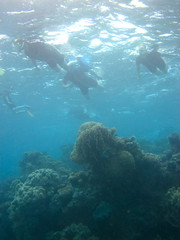 The Great Barrier Reef - 123