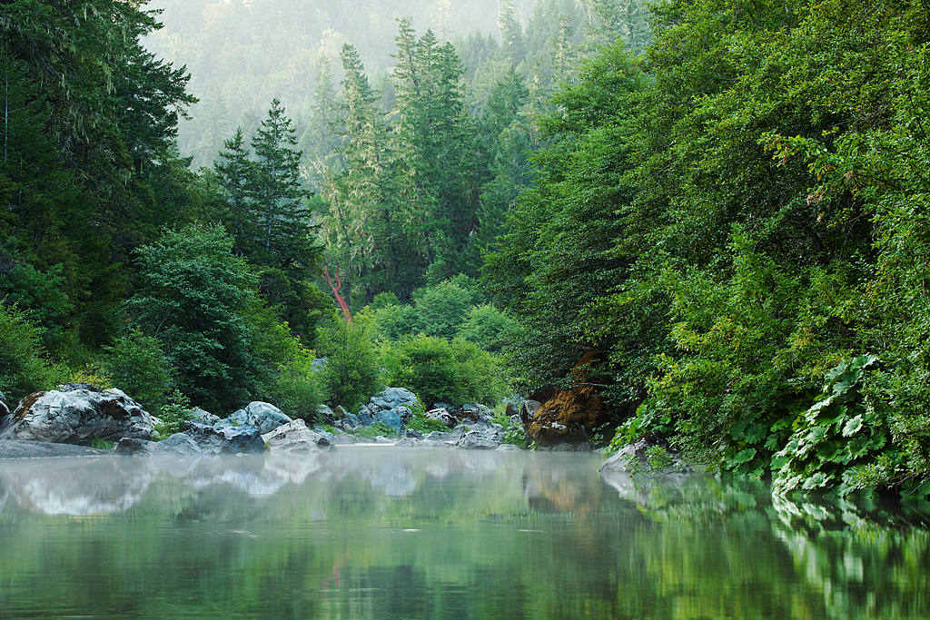 Misty Mornin': Humboldt County, CA