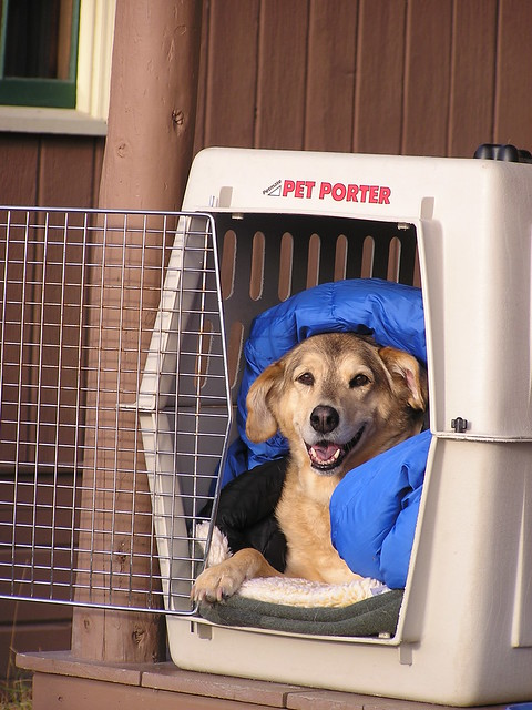 Potty Crate Training Dog