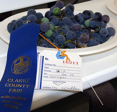 Blue ribbon grapes