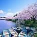 Hirosaki Moat in Spring. (Hirosaki Japan). © Glenn Waters.  Over 8,000 visits to this image.   Thank you. by Glenn Waters ぐれんin Japan.