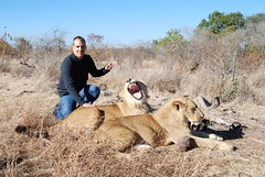Walk With Lions & Cheetahs