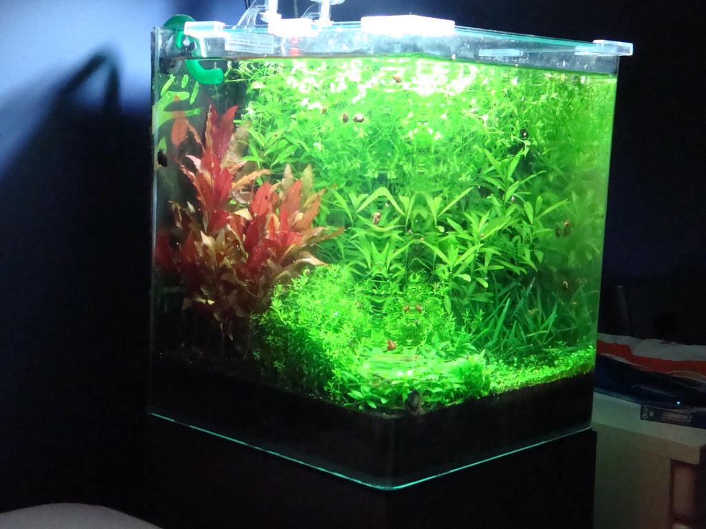 my 30l nano cube nano aquariums aquatic plant central. Black Bedroom Furniture Sets. Home Design Ideas