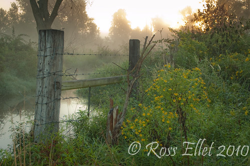 morning flowers trees light fall water fog sunrise fence steam arkansas ozarks