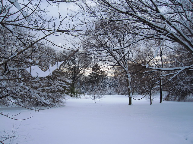 Winter at BBG. Photo by Rebecca Bullene.
