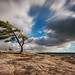 Big puffy clouds at Killbear Provincial Park by angie_1964