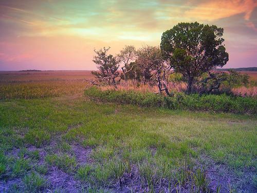 trees sunset photoshop reflections ngc southcarolina marsh huntingisland openspaces natureselegantshots