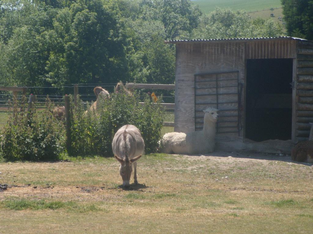 Three to tick off Camel alpaca and donkey. Salisbury to Stonehenge to Amesbury