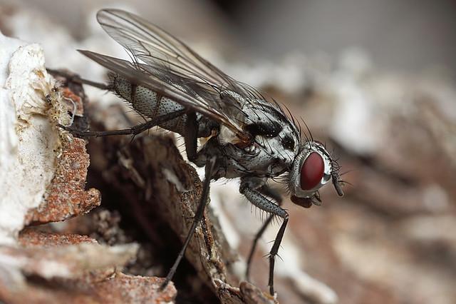 fly on a tree stump