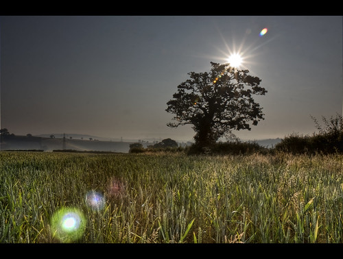 summer tree field sunrise landscape corn wheat devon flare canoneos sunflare rmrayner ralphrayner