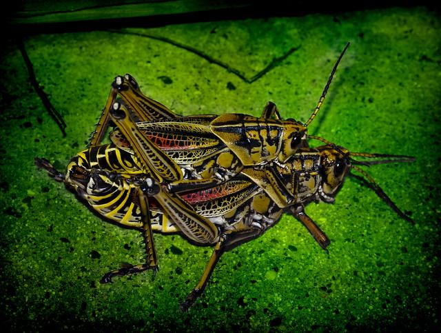 A Bugs Life Porn 90