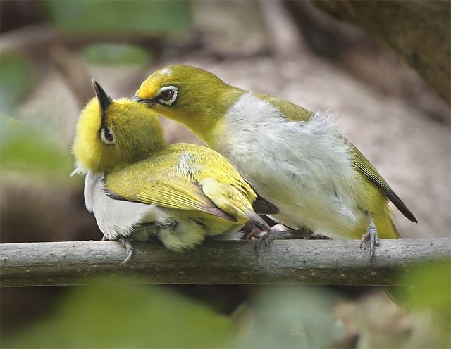 Birds Eye Fish Cakes Nutritional Value