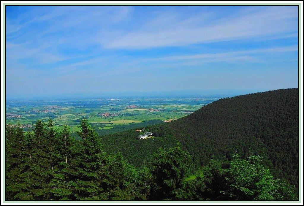 Alsace Plain