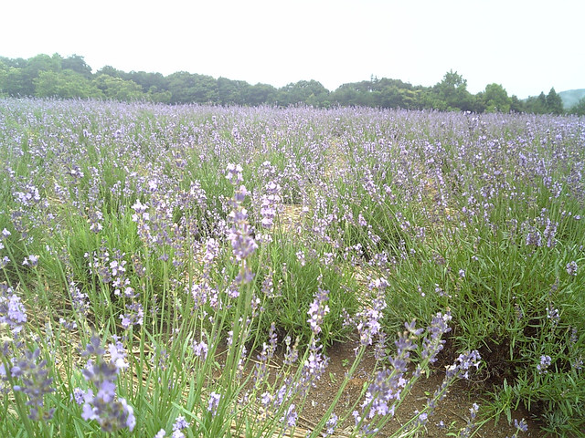Menards Landscaping Bushes : Menard aoyama resort