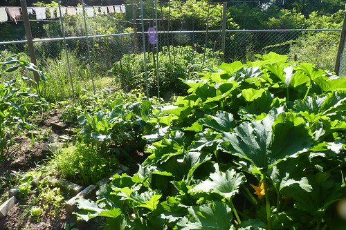 inside the vegetable garden