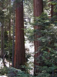 Sequoia Hike