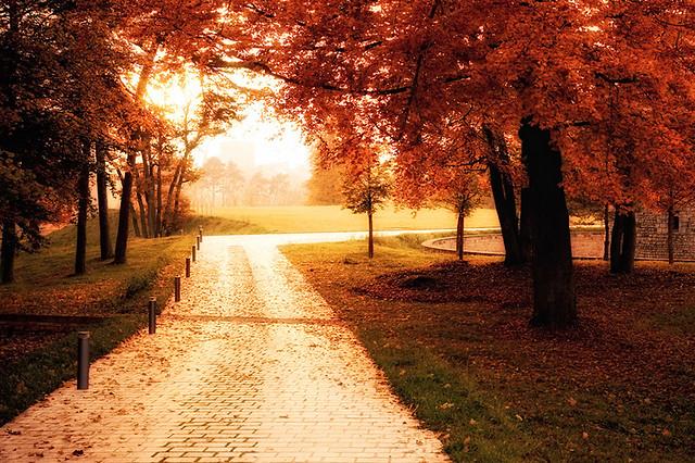 fall is near