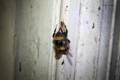 Bee & Moth