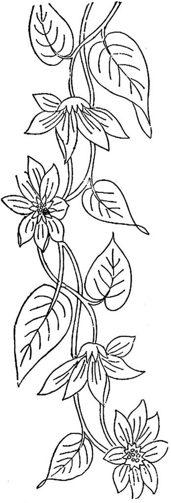 1886 Ingalls Flowering Vine