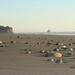Ruby Beach - Olympic Peninsula - near Forks, WA by Photography by Jen