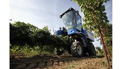 На Кубани образована Ассоциация аграрного туризма