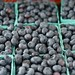 Hillside Orchards Duke blueberries