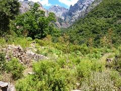 Retour à Monte Estremu : ruines du couvent de Santa Maria et Capu Tafonatu