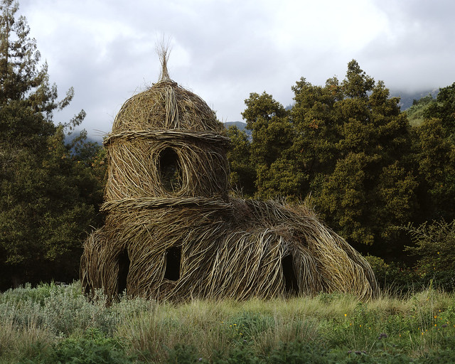 Toad Hall, 2005. Willow saplings, 27' high. Santa Barbara Botanic Garden, Santa Barbara, California. Photo by Nell Campbell.