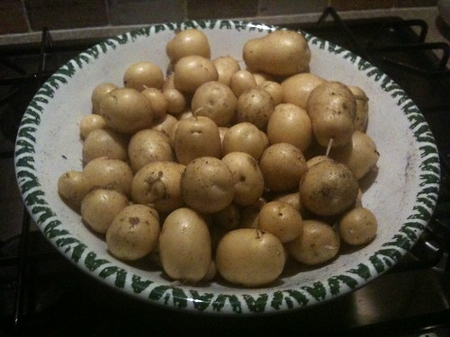 potato harvest!