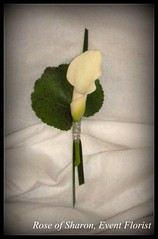 Boutonniere: White Calla Lily and Galex