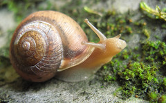 schnecken(0.0), escargot(0.0), animal(1.0), sea snail(1.0), molluscs(1.0), snail(1.0), marine biology(1.0), macro photography(1.0), fauna(1.0), close-up(1.0),