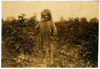 Lewis Hine: Laura Petty, a 6 year old berry picker on Jenkins farm, Rock Creek, Maryland, 1909