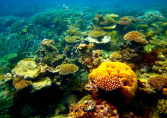 The Great Barrier Reef - 136