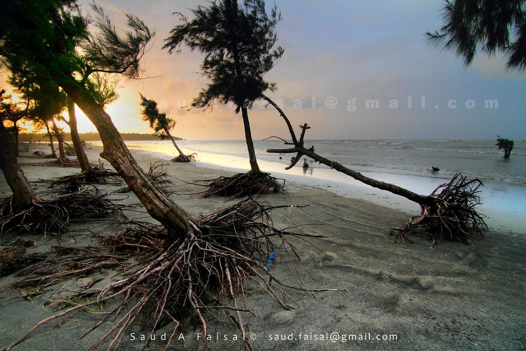 Soil Erosion [Kuakata, Bangladesh]