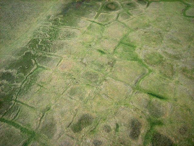 Tundra Squares