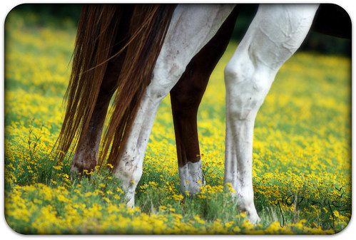 ~grazing in yellow~
