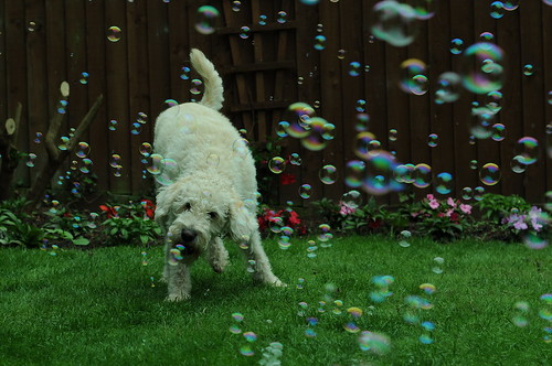 Biting bubbles