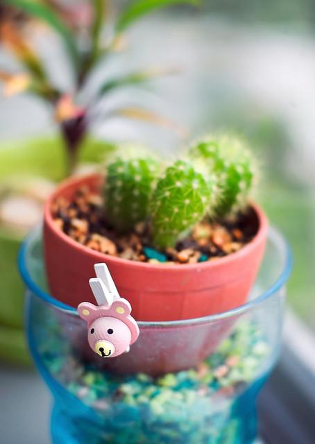 Cactus in a jar