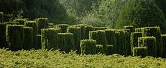 Les jardins de Séricourt - Photo of Magnicourt-sur-Canche