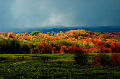 north_america_michigan_autumn_vineyard