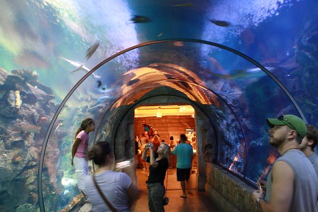 Aquarium Explore Rezsox 39 S Photos On Flickr Rezsox Has