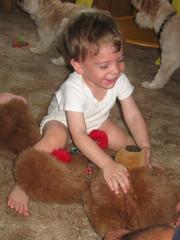 Baby Vs. Bear