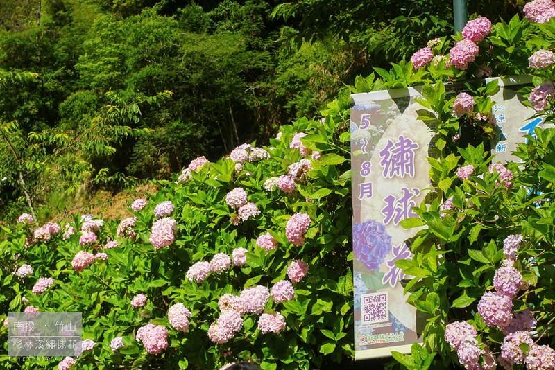 杉林溪繡球花17