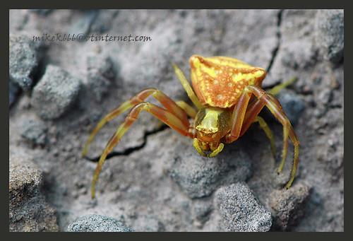 spider reino los mallos 1 june 2010