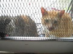 Kitties crying in the rain