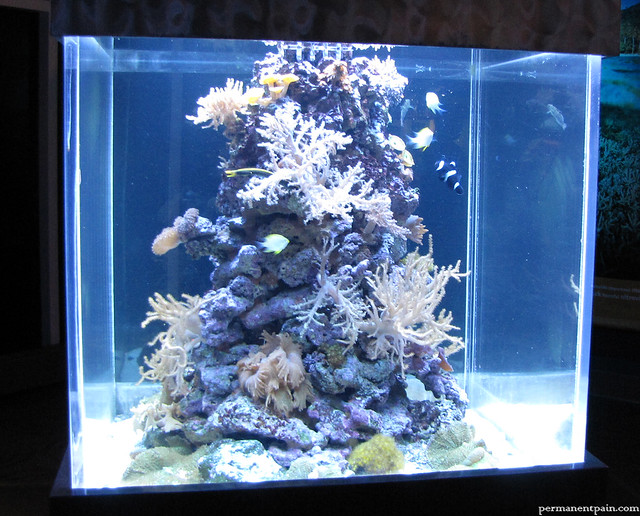 square fish tank flickr photo sharing